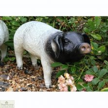 Pig Up Garden Ornament