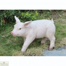 British Pig Garden Ornament