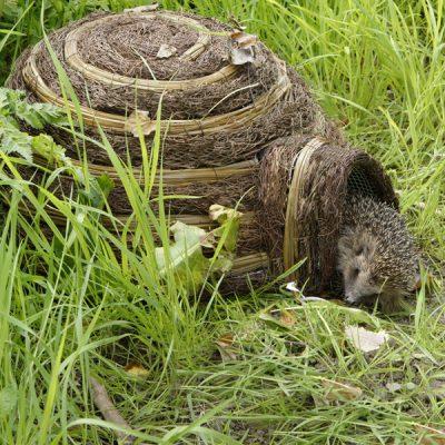 Igloo Wildlife Hedgehog House_4