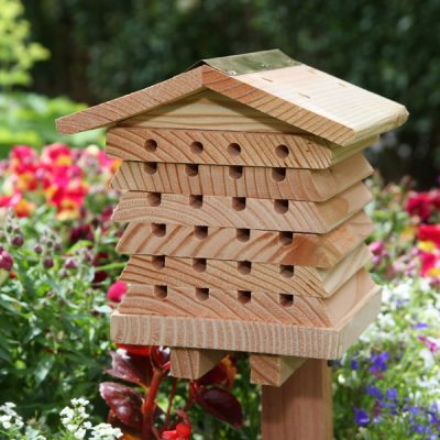 Solitary Bee Hive_2