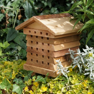 Solitary Bee Hive_3