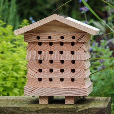 Solitary Bee Hive_4