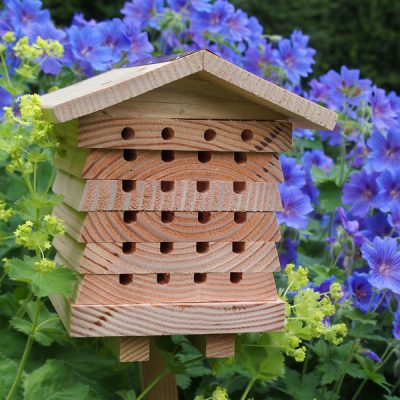 Solitary Bee Hive_1