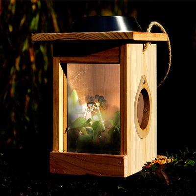 Solar Illuminated Minibeast Centre_1