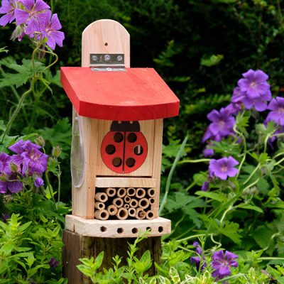 Ladybird Lodge Insect House_2