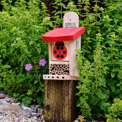 Ladybird Lodge Insect House_3
