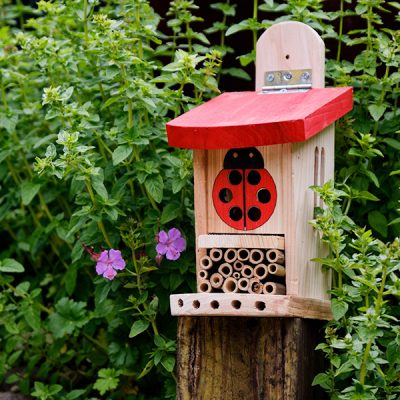 Ladybird Lodge Insect House_4