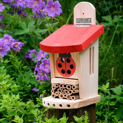 Ladybird Lodge Insect House_1
