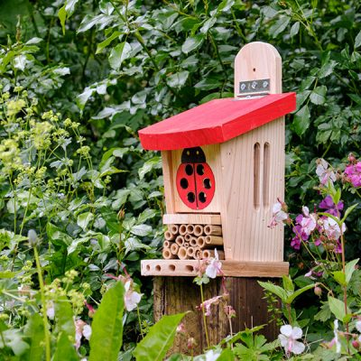 Ladybird Lodge Insect House_5