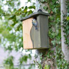 Mounted Bird Box Nester