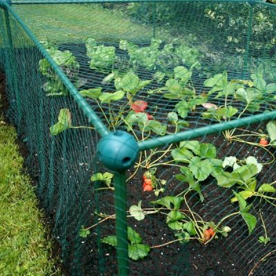 Garden Fruit and Veg Protective Cage_3