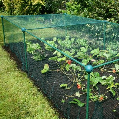 Garden Fruit and Veg Protective Cage_1