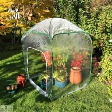 High Level Pop Up Poly Cloche 1.25m x 1.25m x 1.85m High